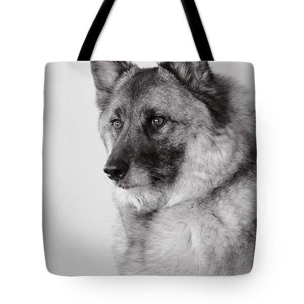 Tote Bag featuring the photograph Dog Loki by Irina ArchAngelSkaya