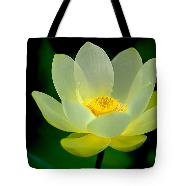 Lotus Blossom Tote Bag by Tyson and Kathy Smith