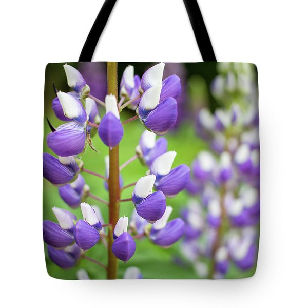 Tote Bag featuring the photograph Lupine Blossom by Robert Clifford