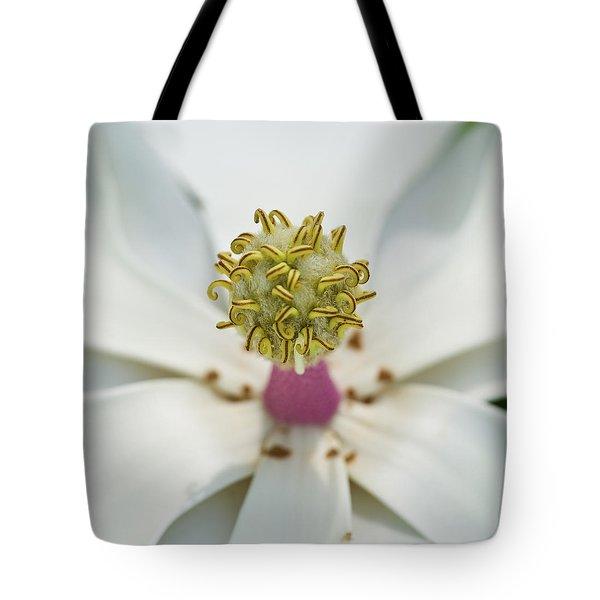 Magnolia Bloom Tote Bag by Rich Franco