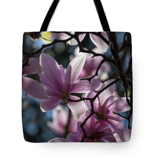 Magnolia Net - Tote Bag