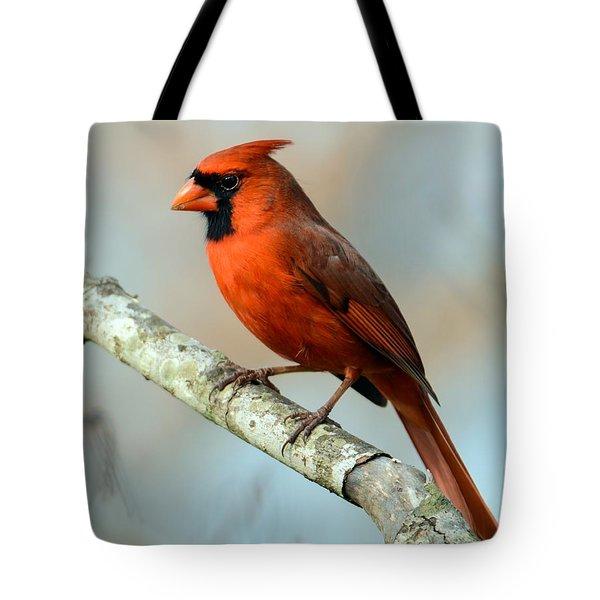 Male Cardinal Tote Bag by Debbie Green