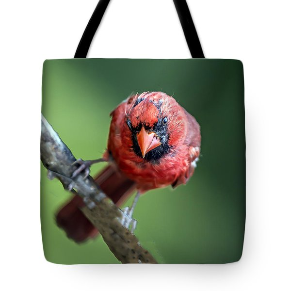 Male Cardinal Portrait Tote Bag