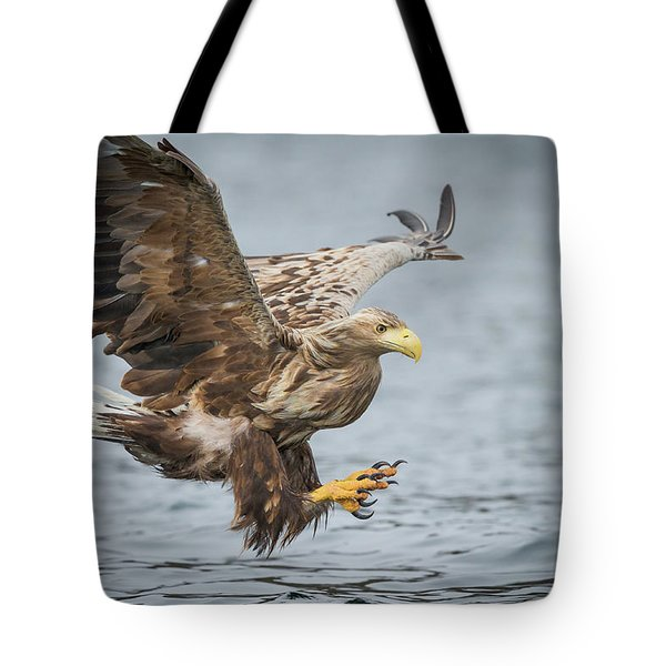Male White-tailed Eagle Tote Bag