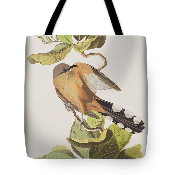 Mangrove Cuckoo Tote Bag