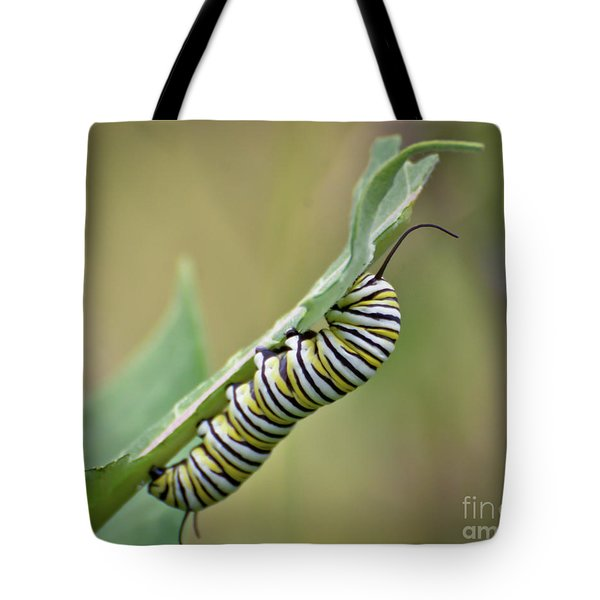 Tote Bag featuring the photograph Monarch Caterpillar by Kerri Farley