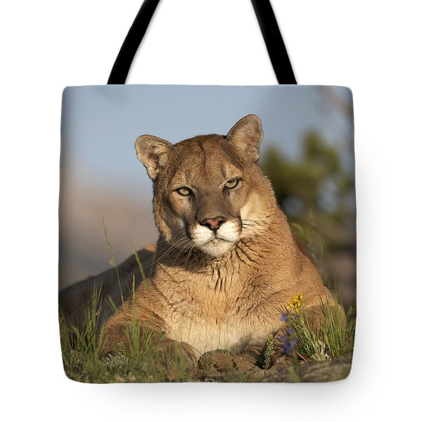 Tote Bag featuring the photograph Mountain Lion Portrait North America by Tim Fitzharris