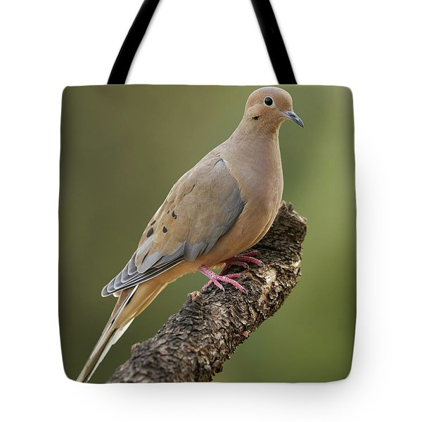 Mourning Dove Tote Bag by Doug Herr
