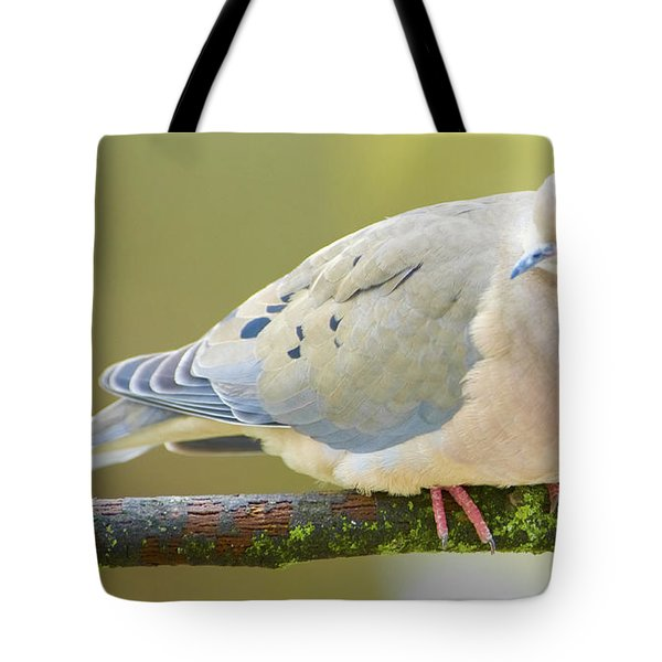 Mourning Dove On Tree Branch Tote Bag