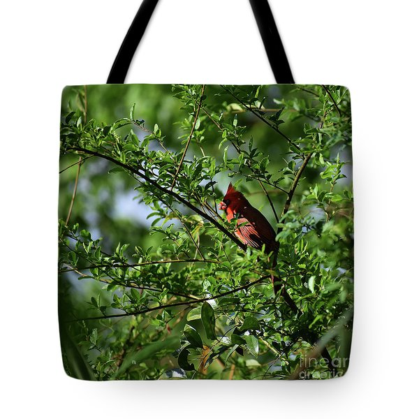 Tote Bag featuring the photograph Mr Red by Skip Willits