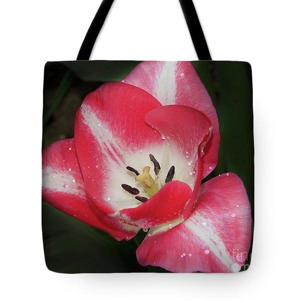 Tote Bag featuring the photograph Nice Tulip by Elvira Ladocki