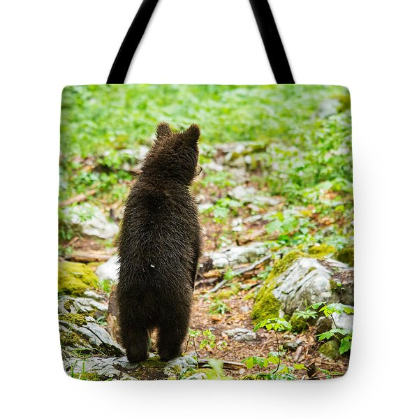 Tote Bag featuring the photograph One Year Old Brown Bear In Slovenia by Ian Middleton
