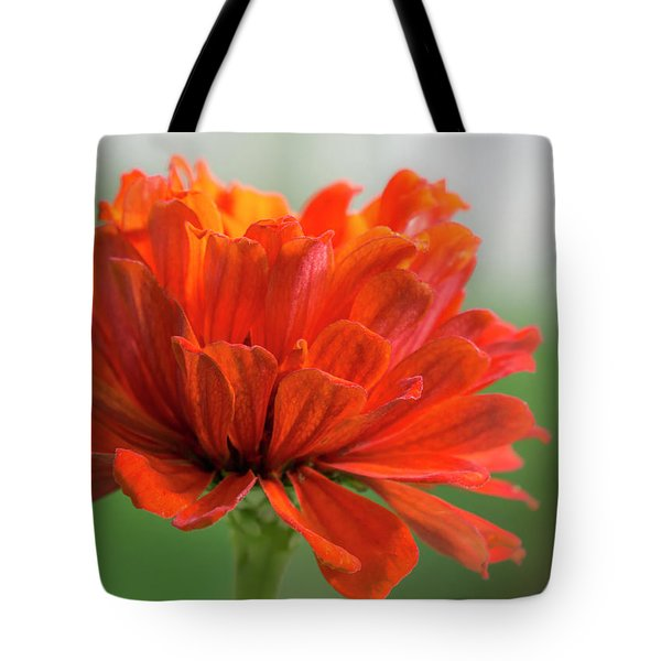 Red Zinnia  Tote Bag by Jim Hughes