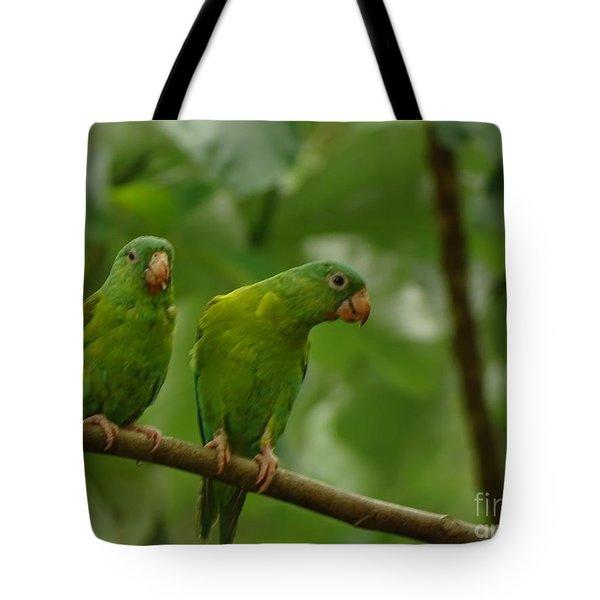 Orange -chinned Parakeets  Tote Bag