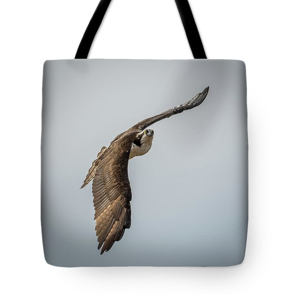 Osprey In Flight Tote Bag by Paul Freidlund