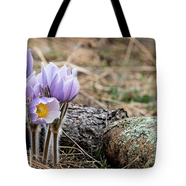 Pasque Flower Tote Bag