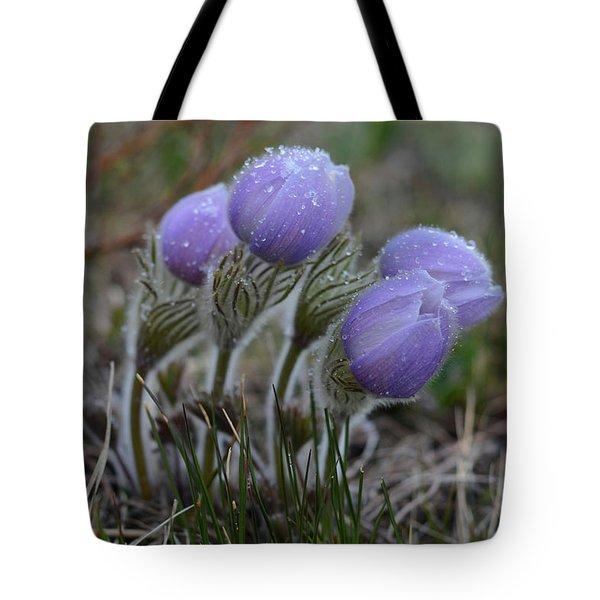 Pasque Flowers  Tote Bag
