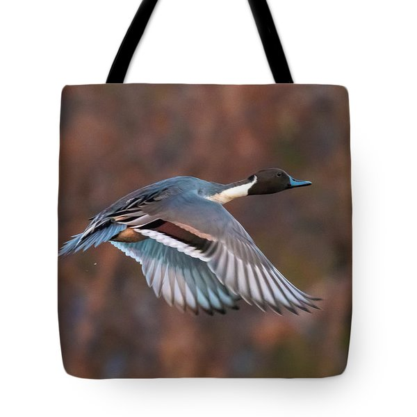 Tote Bag featuring the photograph Pintail  by Kelly Marquardt