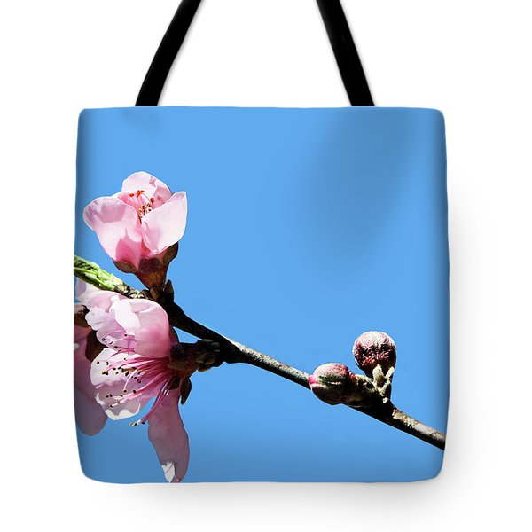 Plum Blossoms Tote Bag by Kristin Elmquist