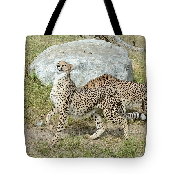 Tote Bag featuring the photograph Poise by Fraida Gutovich