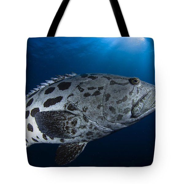 Potato Grouper, Australia Tote Bag by Todd Winner