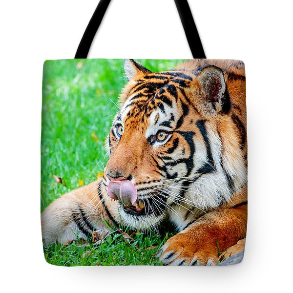 Pre-pounce Tiger Tote Bag