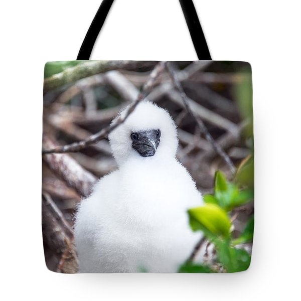 Red Footed Booby Chick Tote Bag