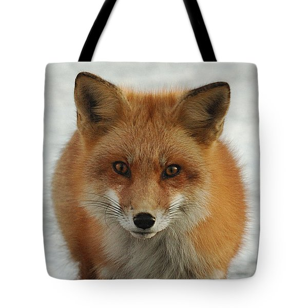Red Fox Tote Bag by Diane Giurco