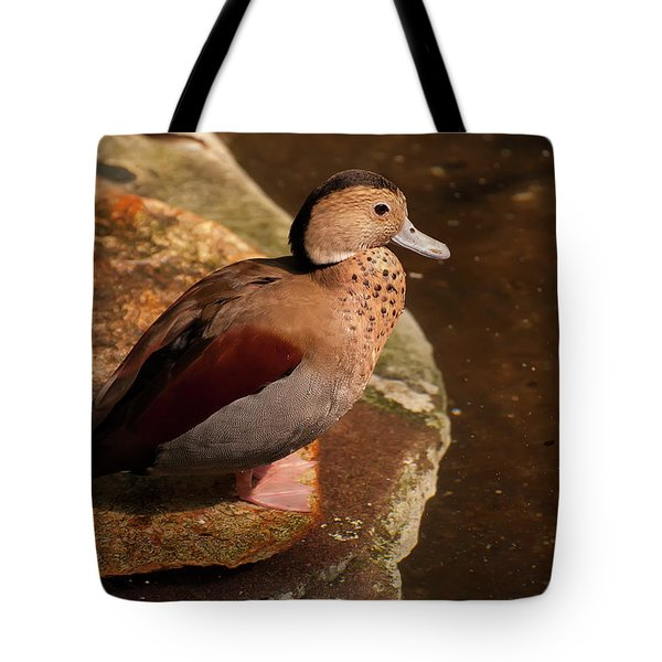 Tote Bag featuring the photograph Ringed Teal On A Rock by Chris Flees