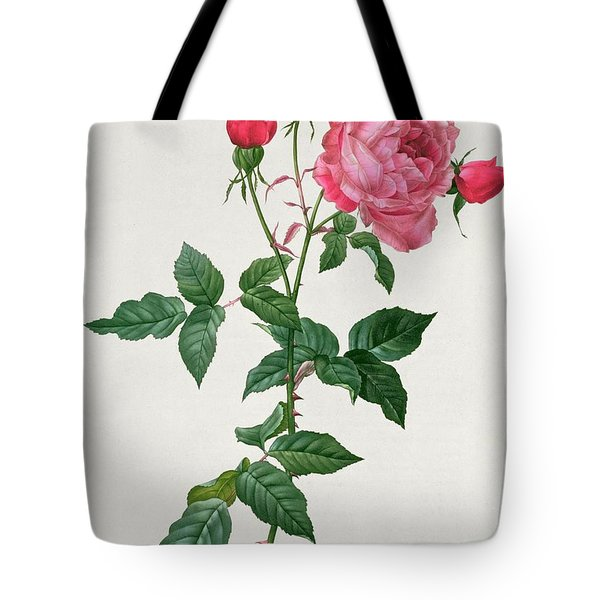 Rosa Indica Tote Bag by Pierre Joseph Redoute