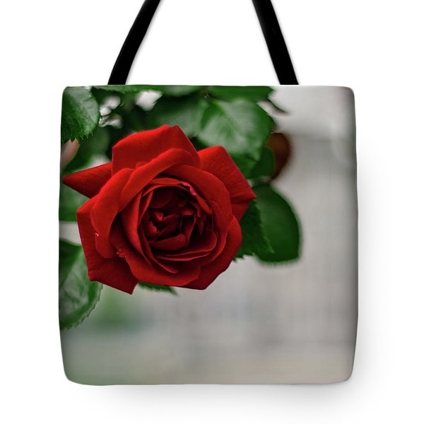 Roses In The City Park Tote Bag