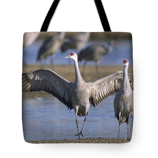 Sandhill Cranes Roost Along The Platte Tote Bag