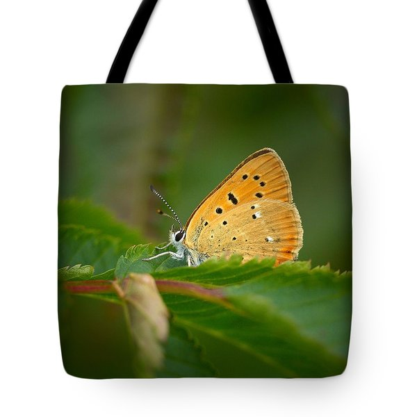 Tote Bag featuring the photograph Scarce Copper by Jouko Lehto