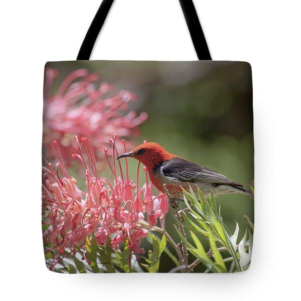 Scarlet Honeyeater Tote Bag