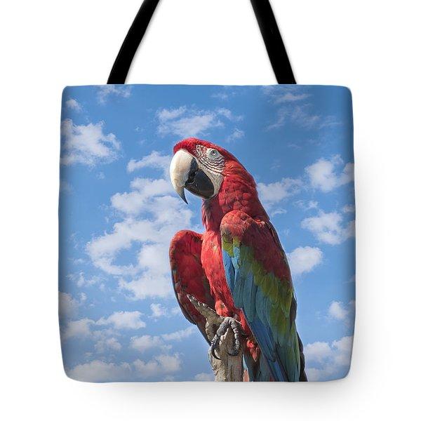 Scarlet Macaw Tote Bag by Kim Hojnacki
