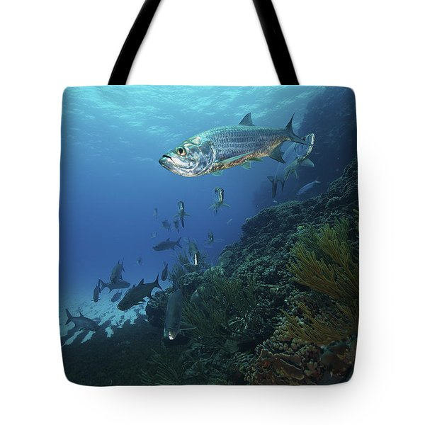 School Of Tarpon, Bonaire, Caribbean Tote Bag by Terry Moore