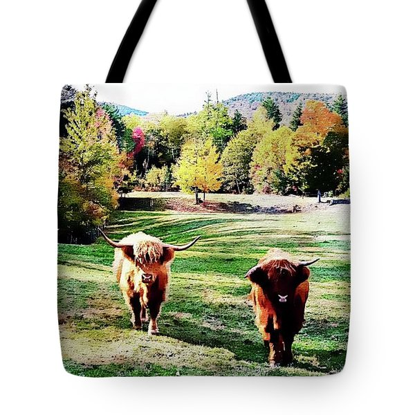 Tote Bag featuring the photograph Scottish Highland Cattle - New Hampshire Fall Foliage by Joseph Hendrix