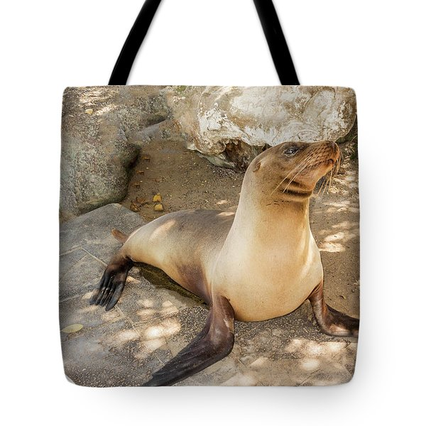 Sea Lion On The Beach, Galapagos Islands Tote Bag