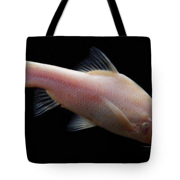 Small Eye Golden Line Barbel Tote Bag