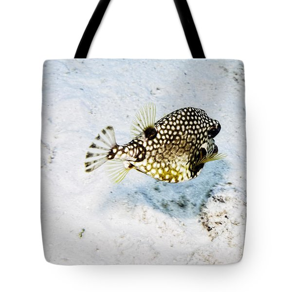 Smooth Trunkfish Tote Bag by Perla Copernik