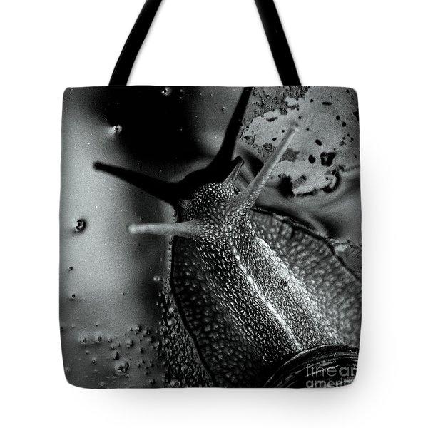 Snail Tote Bag by Stelios Kleanthous