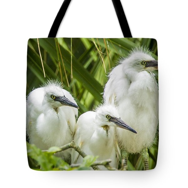 Tote Bag featuring the photograph Snowy Egret Chicks by Paula Porterfield-Izzo