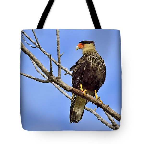 Tote Bag featuring the photograph Southern Comfort by Tony Beck