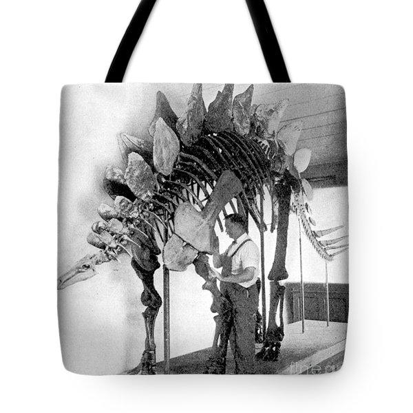 Stegosaurus Tote Bag by Science Source