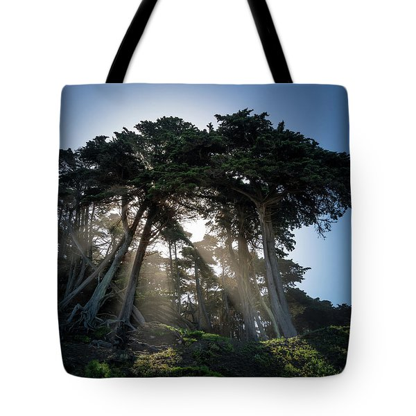 Sunbeams From Large Pine Or Fir Trees On Coast Of San Francisco  Tote Bag by Steven Heap