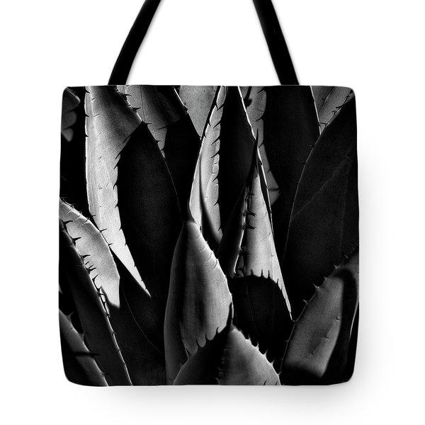 Sunlit Cactus Tote Bag by David Patterson