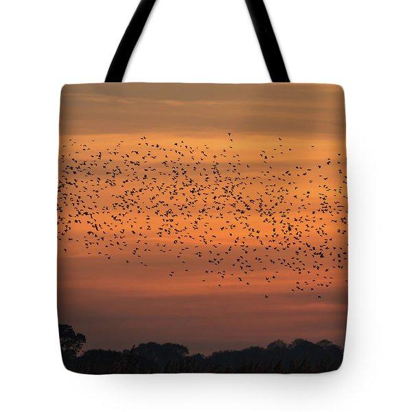 Sunset Starlings  Tote Bag