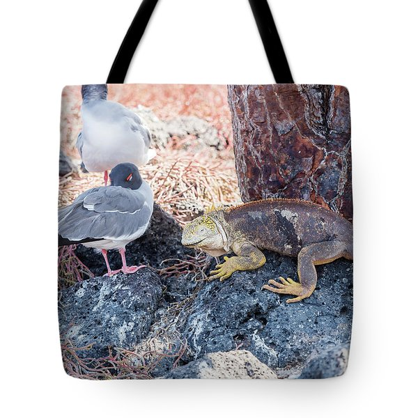 Swallow Tailed Gull And Iguana On  Galapagos Islands Tote Bag