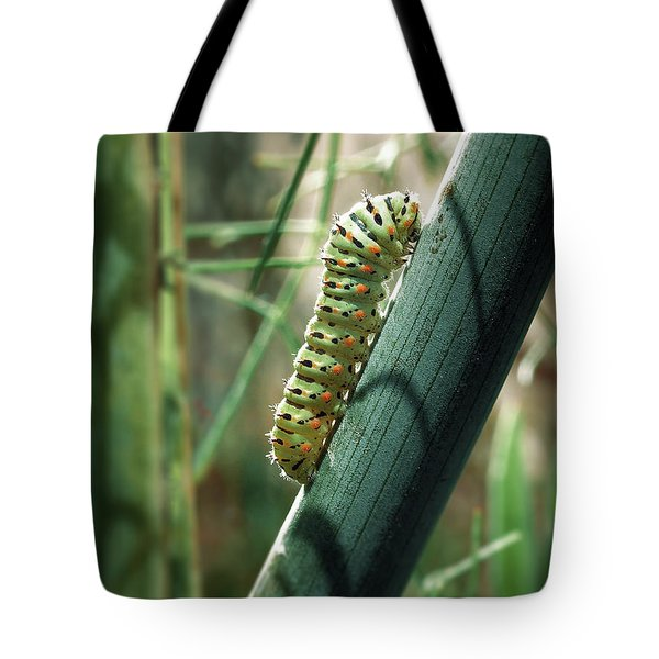 Tote Bag featuring the photograph Swallowtail Caterpillar by Meir Ezrachi