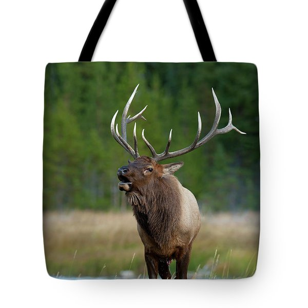 Tote Bag featuring the photograph The Challenger by Sandra Bronstein